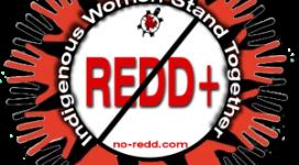 REDD-solidarity-2-300x291