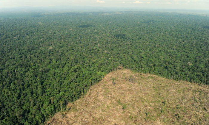"CIFOR's Peter Holmgren on REDD- ""It's disappeared"""
