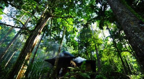 Damar Forests in Asia (UN Photo)