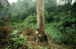 Forest-REDD-Nigeria